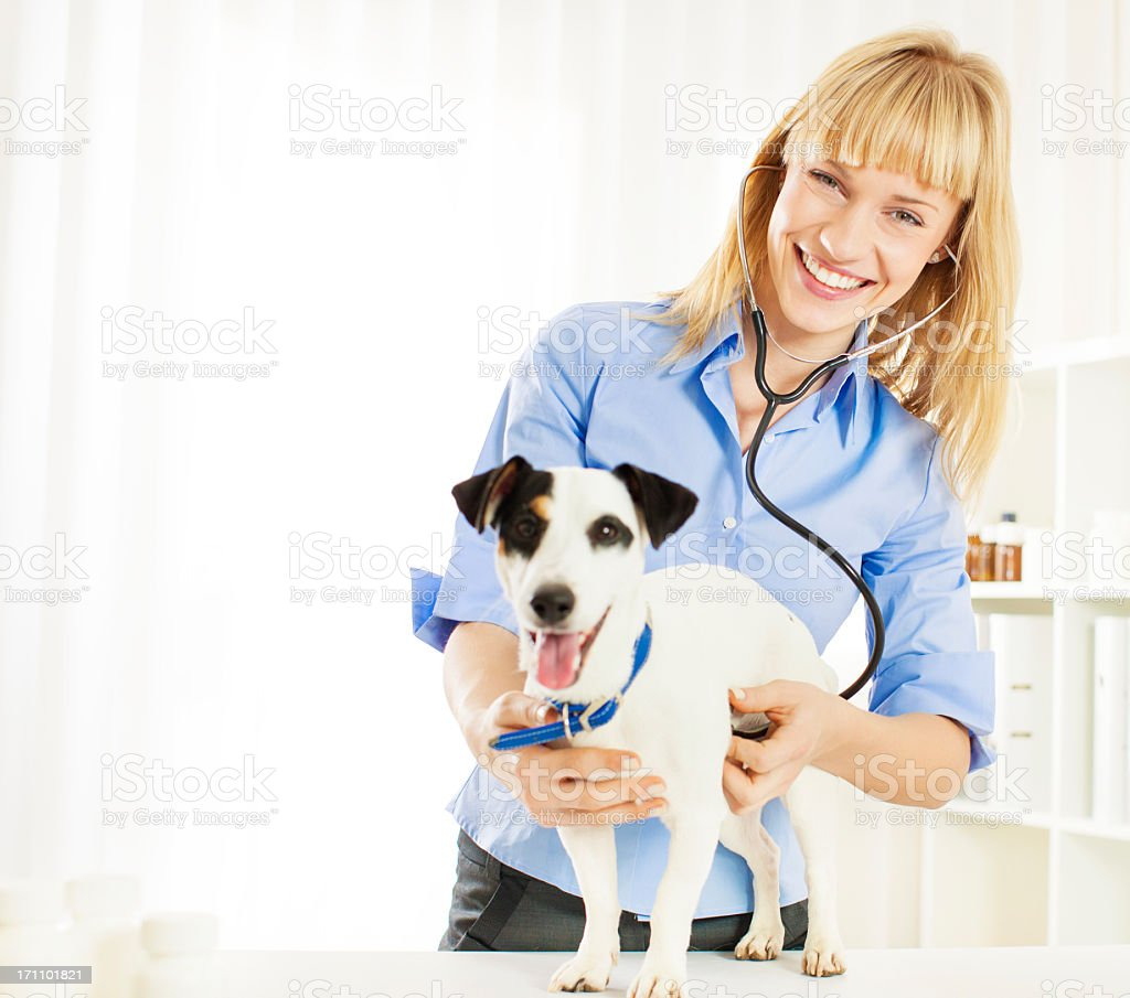Young Female Veterinary Caring About Dog royalty-free stock photo