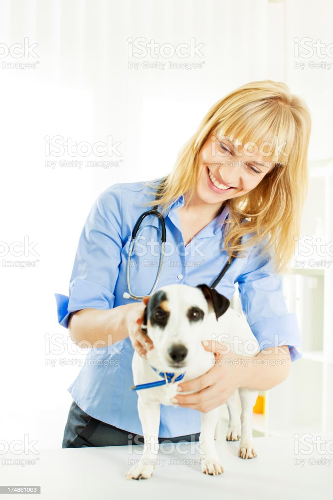 Young Female Veterinary Caring About Dog. royalty-free stock photo