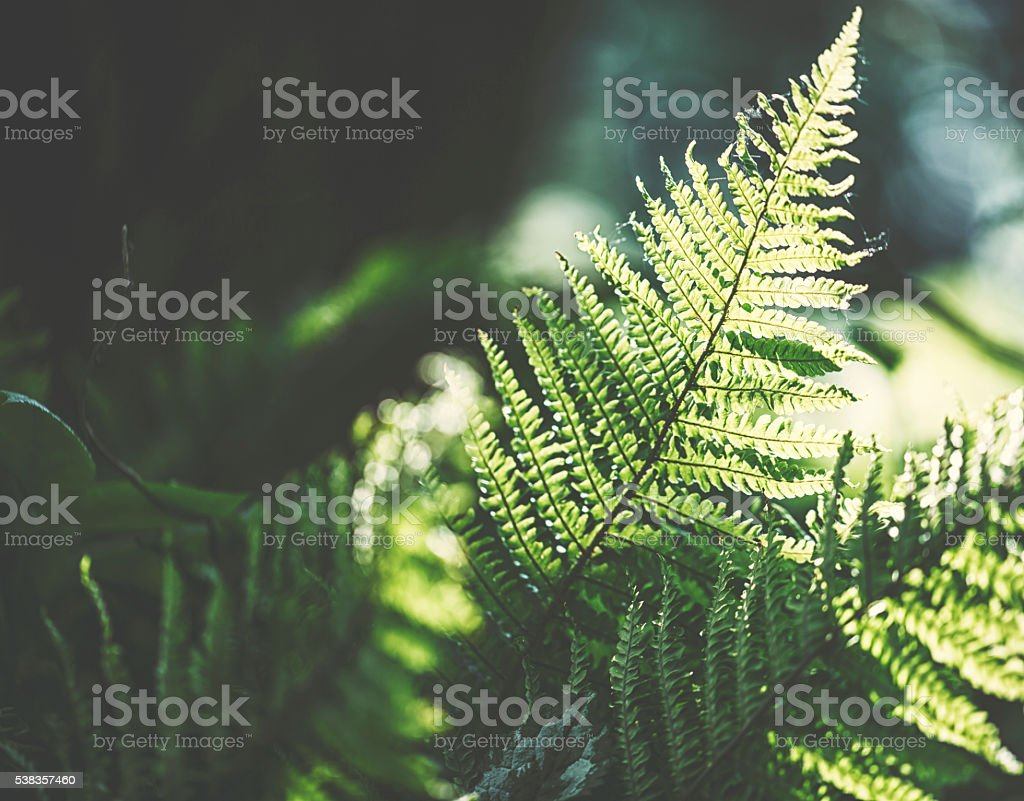 Young fern stock photo