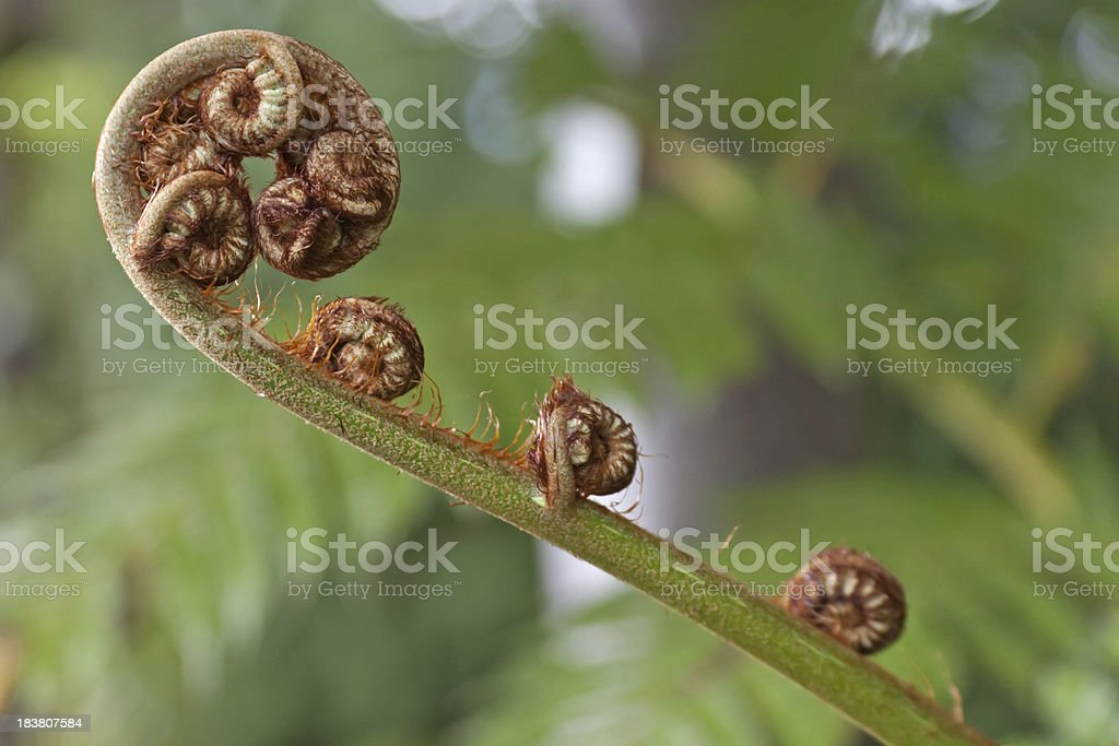 Young fern sprout stock photo