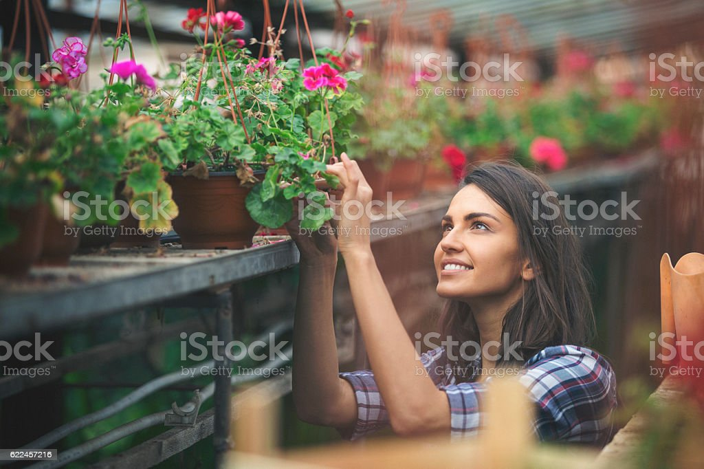 Young florist checking her plants in the greenhouse stock photo