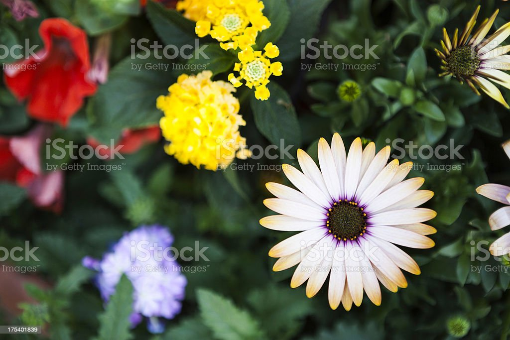 Young flower plants growing in a Greenhouse royalty-free stock photo