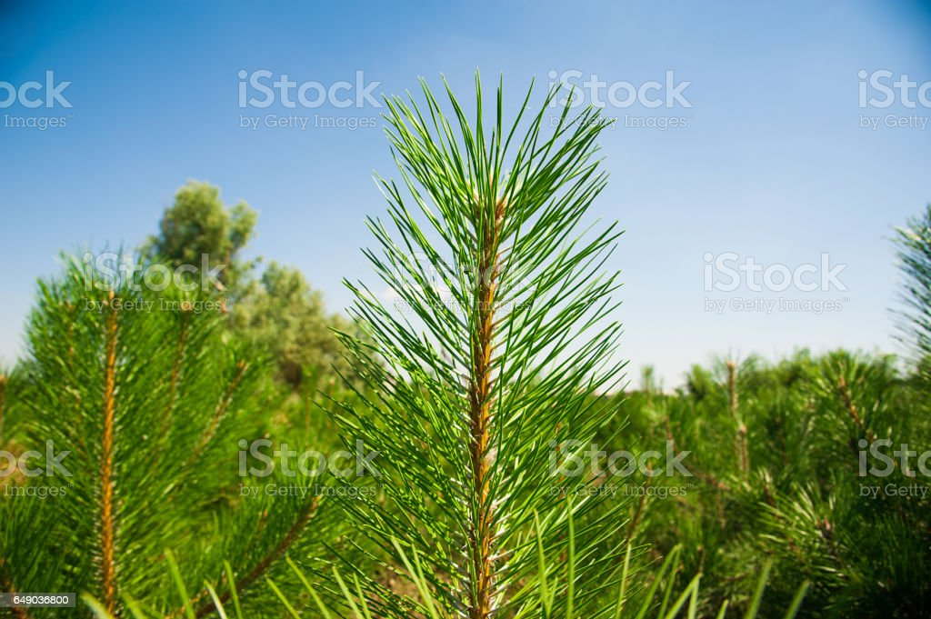 Young forest grow stock photo