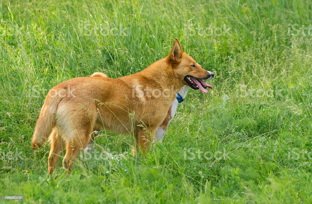 Young four-legged friends stock photo
