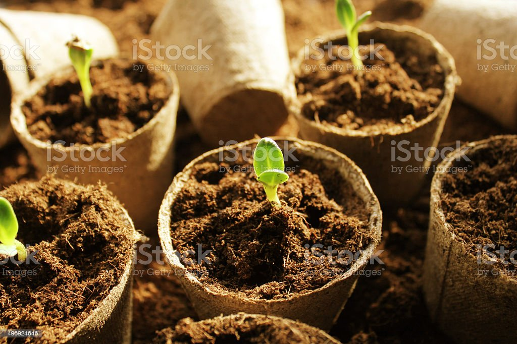 Young fresh seedling stock photo