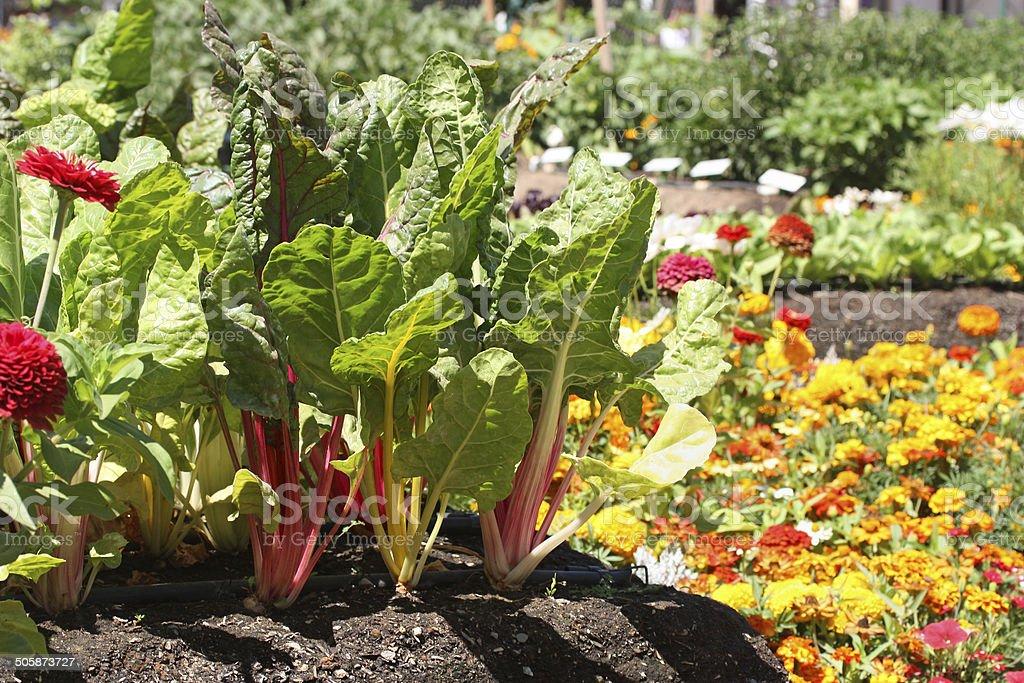 Young Garden stock photo