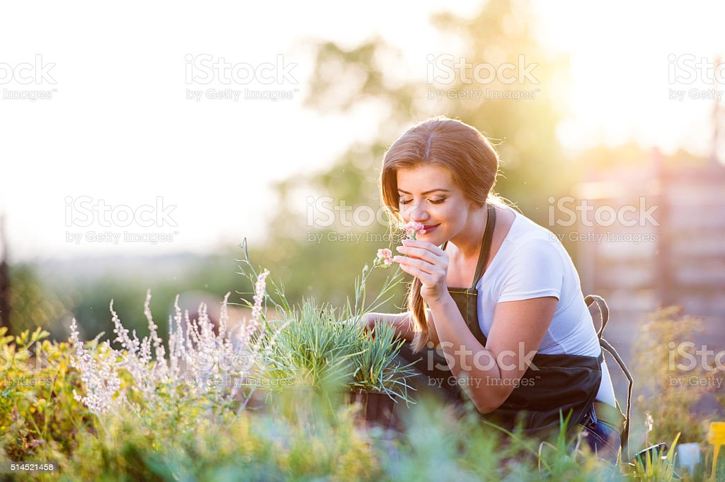Young gardener in garden smelling flower, sunny nature stock photo
