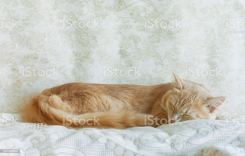 Young ginger cat sleeping stock photo