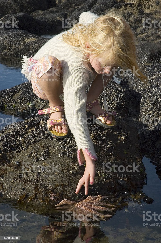 Young girl and starfish stock photo