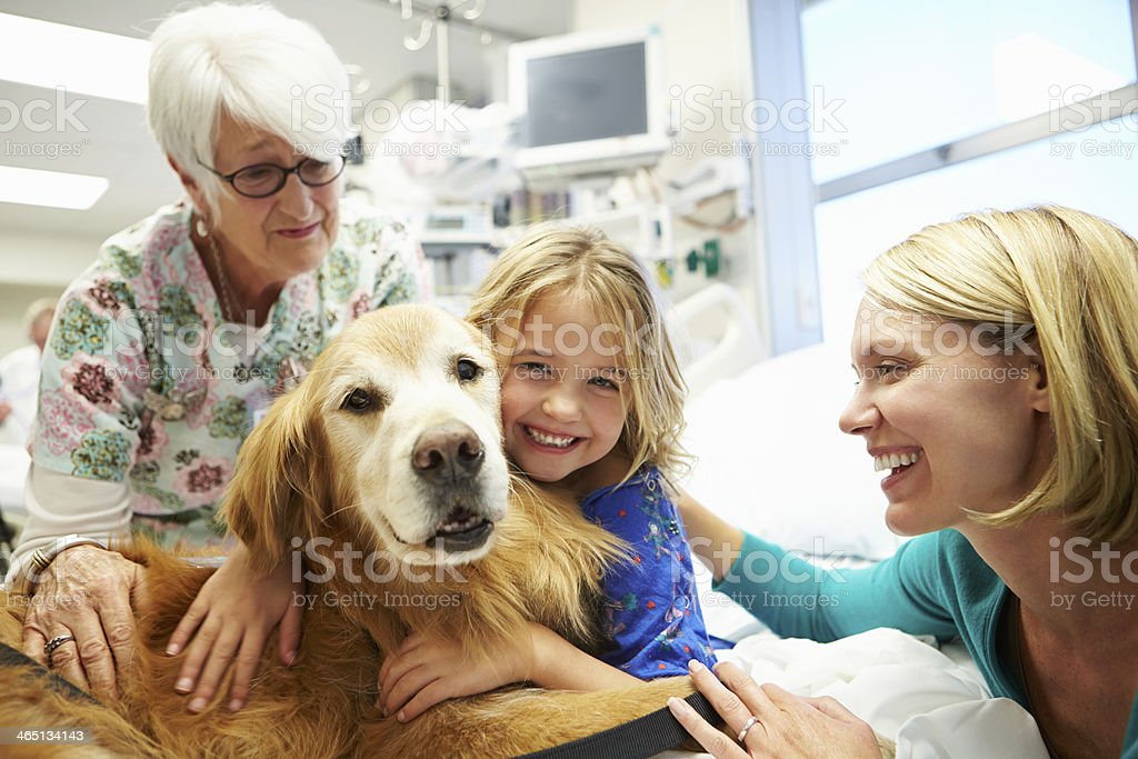 Young Girl Being Visited In Hospital By Therapy Dog stock photo
