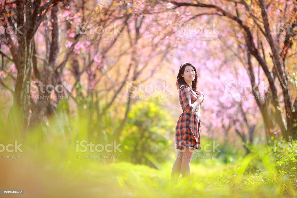 young girl blooming cherry forest Chiangmai thailand stock photo