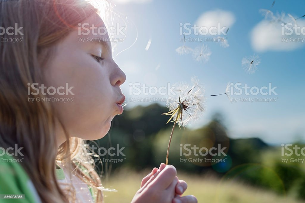 Young Girl Blowing Dandelions. stock photo