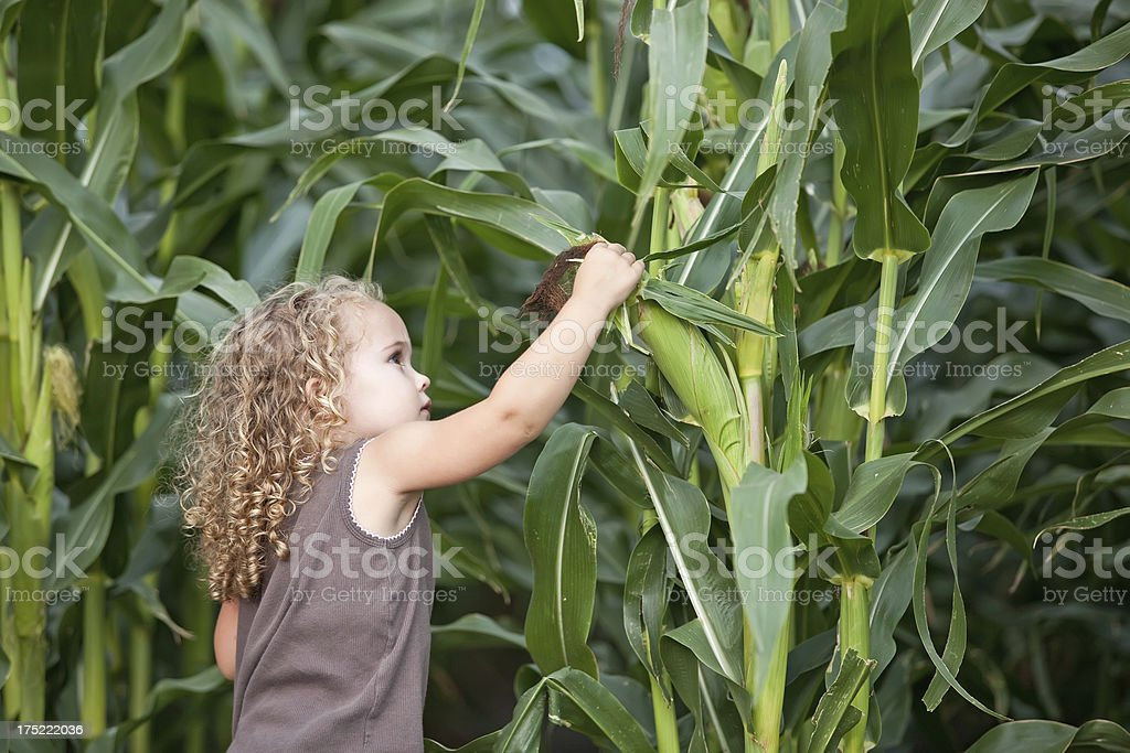 Young Girl Checking Corn royalty-free stock photo