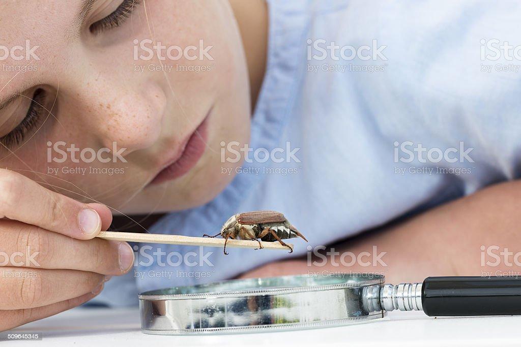 Young Girl Examining Maybug Beetle or Melolontha melolontha. stock photo