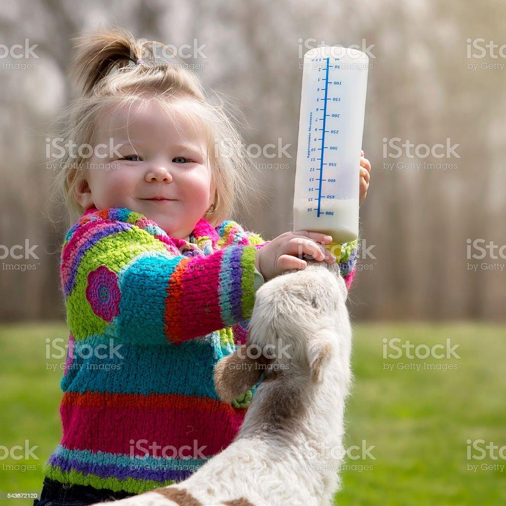 Young girl feeding orphan lamb stock photo