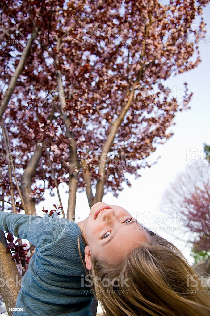 Young girl hanging from cherry tree in blossom. stock photo