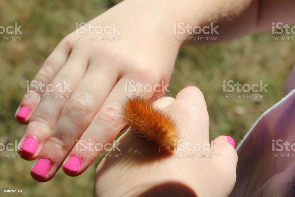 Young girl has a Tiger Moth Caterpillar crawling on her hands. stock photo