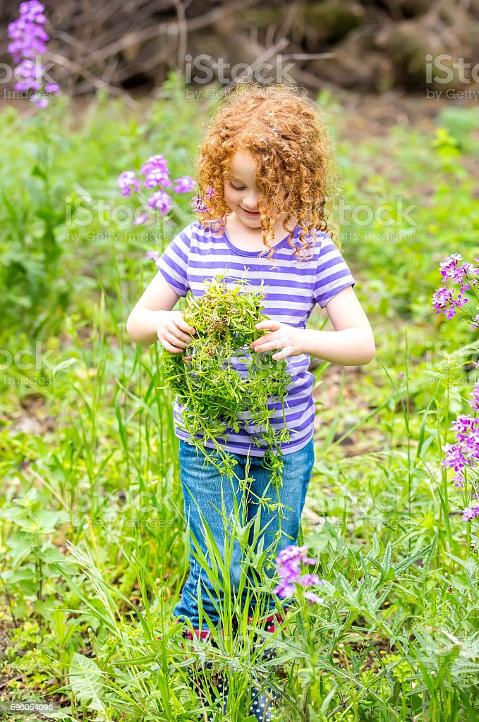 Young Girl Holding A Bunch Of Galium Aparine Weed stock photo