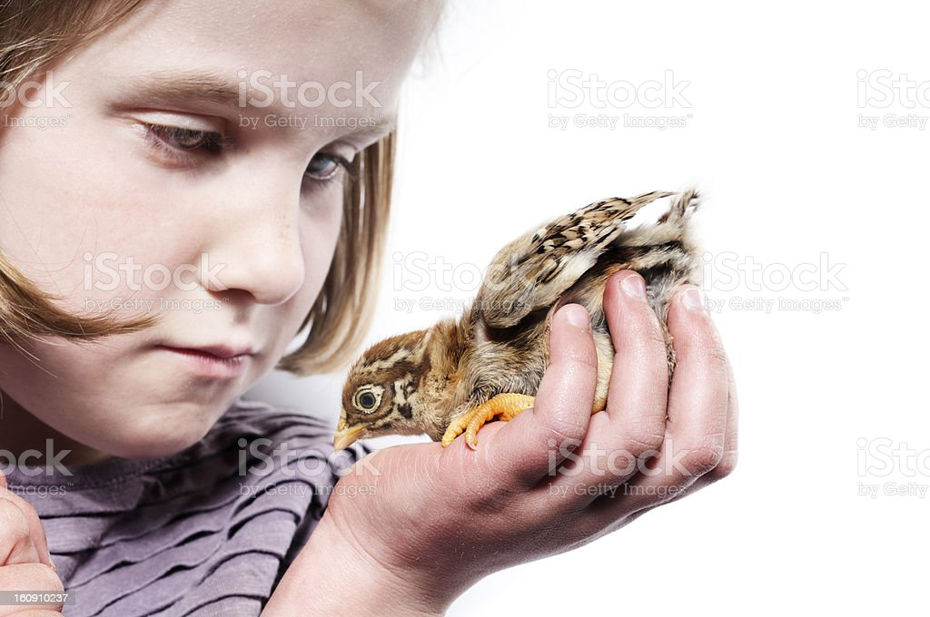 Young Girl Holding a Chick. White Background. royalty-free stock photo