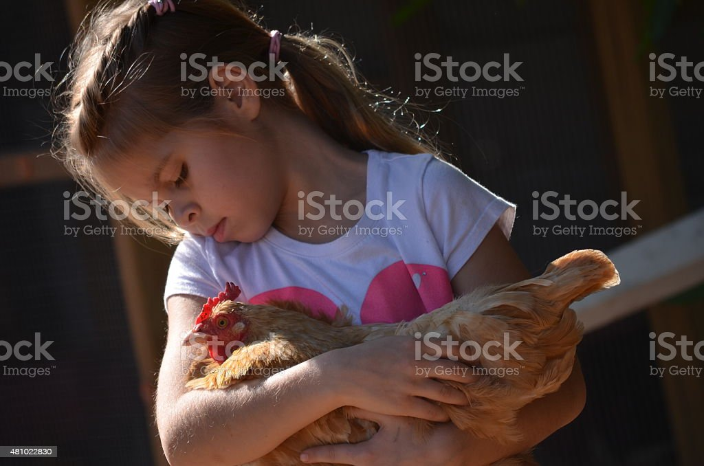 Young Girl Holding A Chicken stock photo