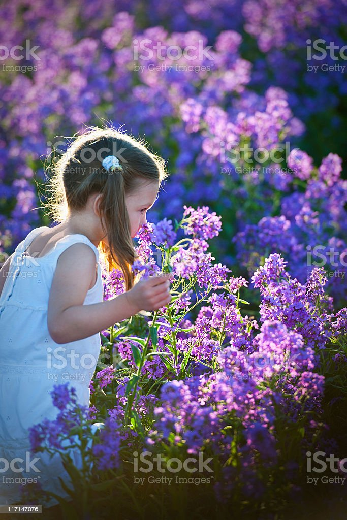 Young girl in white dress, sun kissed, moving through Lavendar royalty-free stock photo