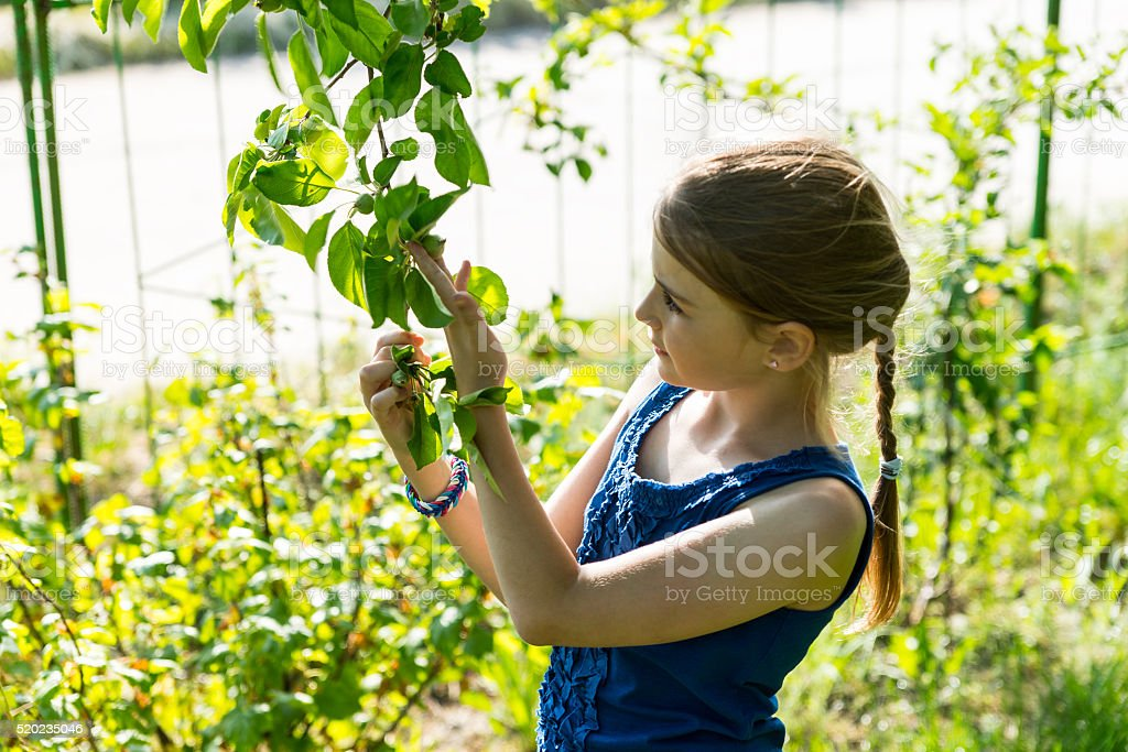 Young Girl Inspecting Leaves on Green Tree stock photo