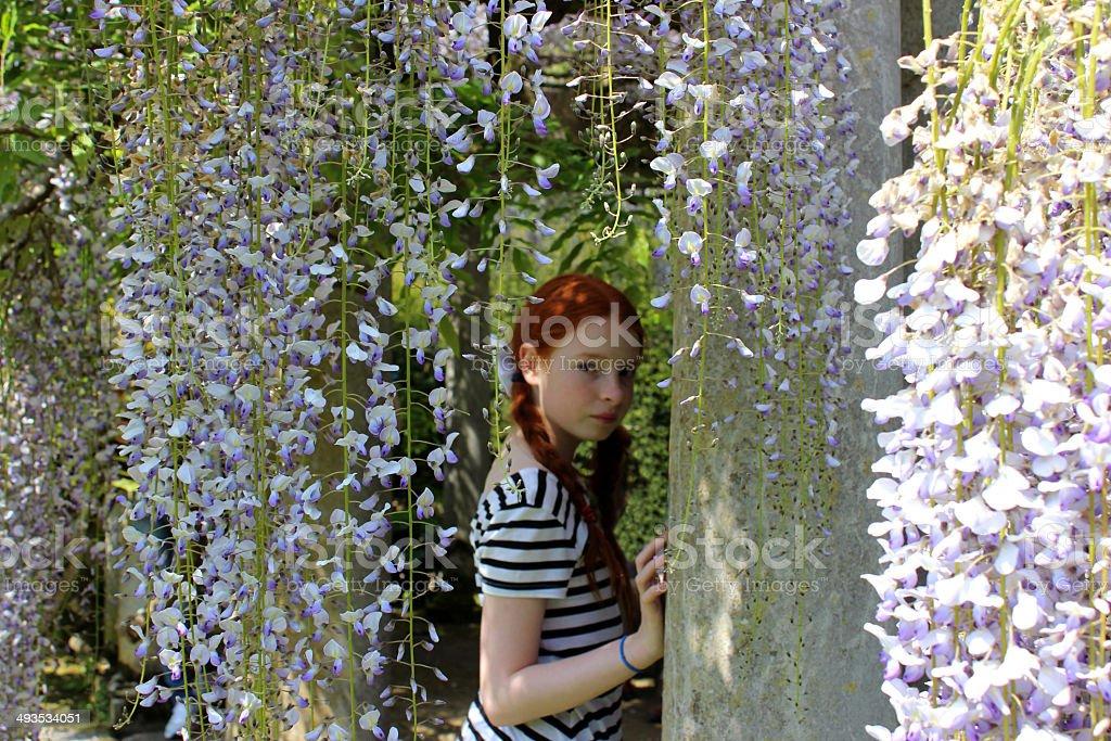 Young girl looking through long, purple wisteria flowers (wisteria floribunda) stock photo