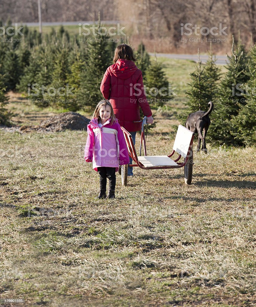 Young Girl, Mother, and Dog Cutting a Christmas Tree stock photo