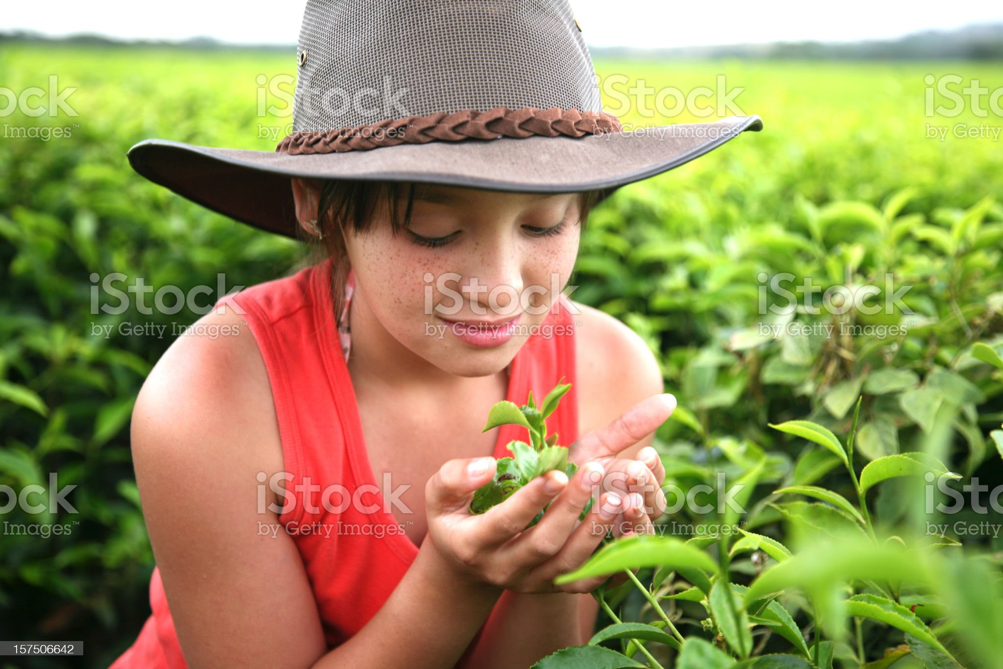 young girl on tea farm royalty-free stock photo