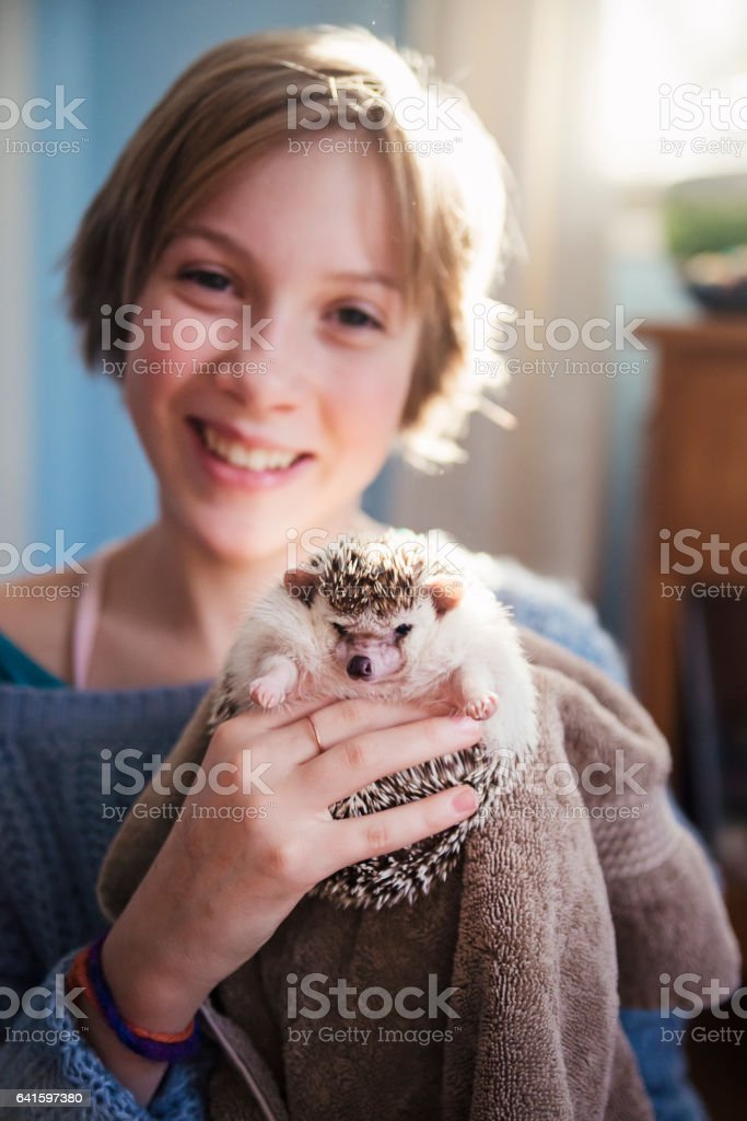 Young girl playing with hedgehog pet in her bedroom. stock photo