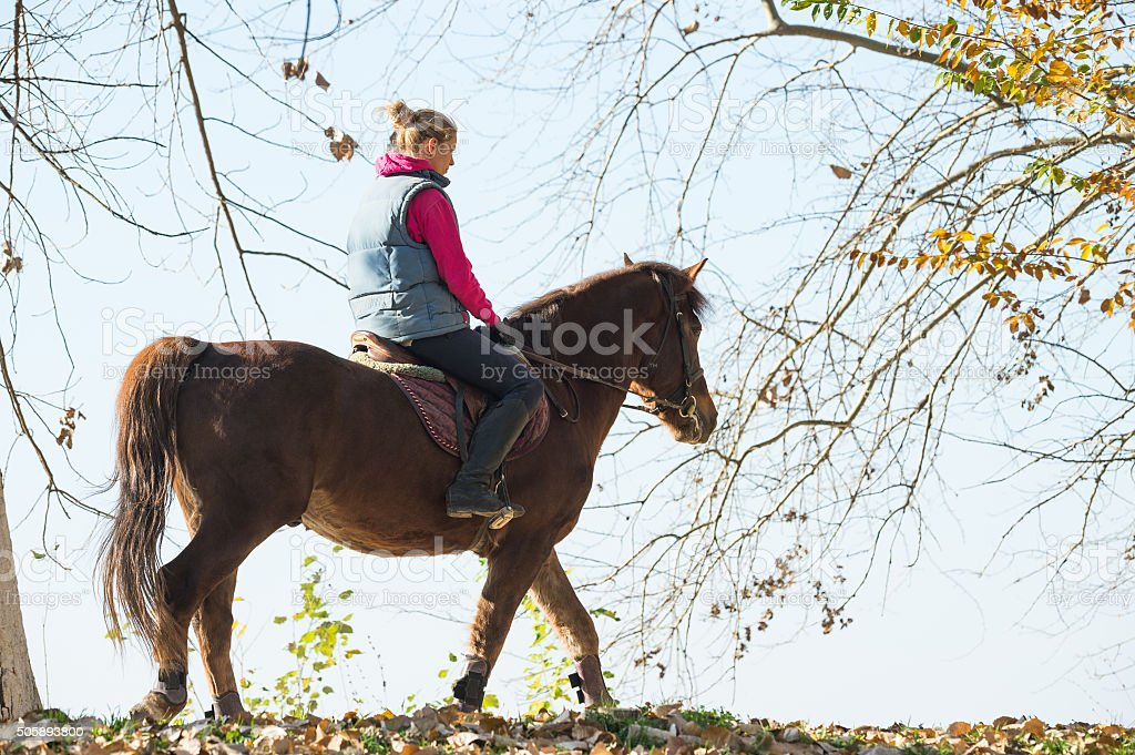 Young girl riding horses stock photo