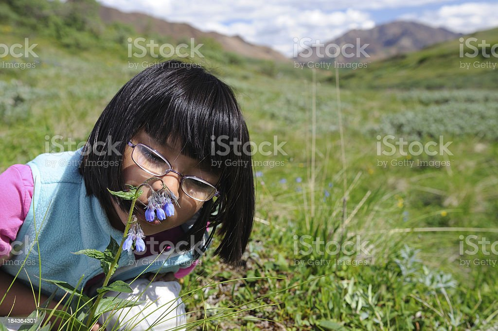 Young Girl Smelling Bluebell Flower in Alaska stock photo