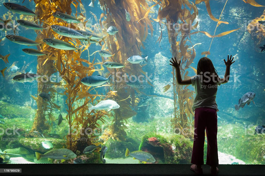 Young Girl Standing Up Against Large Aquarium Observation Glass stock photo