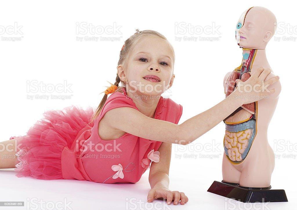Jeune fille étudier la structure de l'homme. photo libre de droits