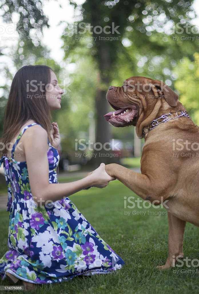 Young Girl Teaching Dog to Sit stock photo