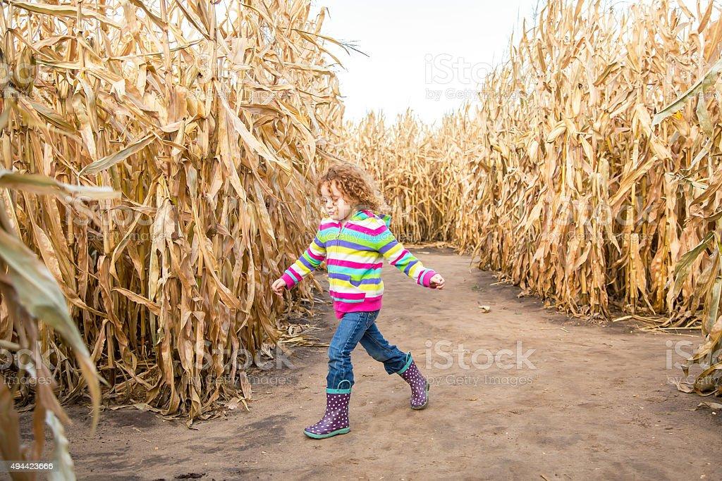 Young Girl Walking Through Autumn Corn Maze stock photo