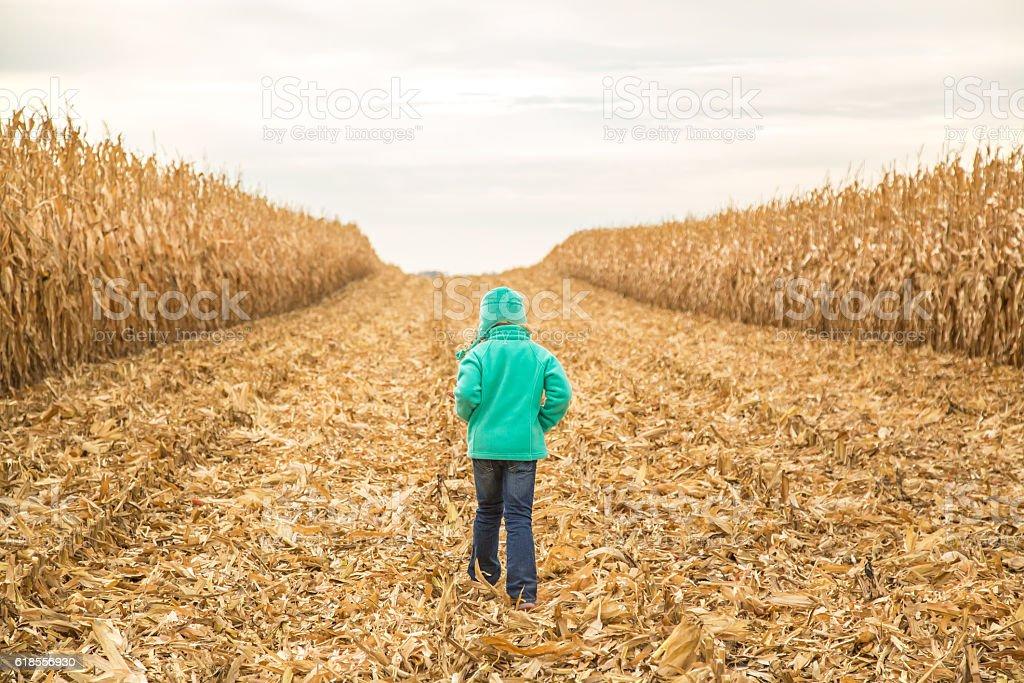 Young Girl Walking Through Partially Harvest Field of Corn stock photo