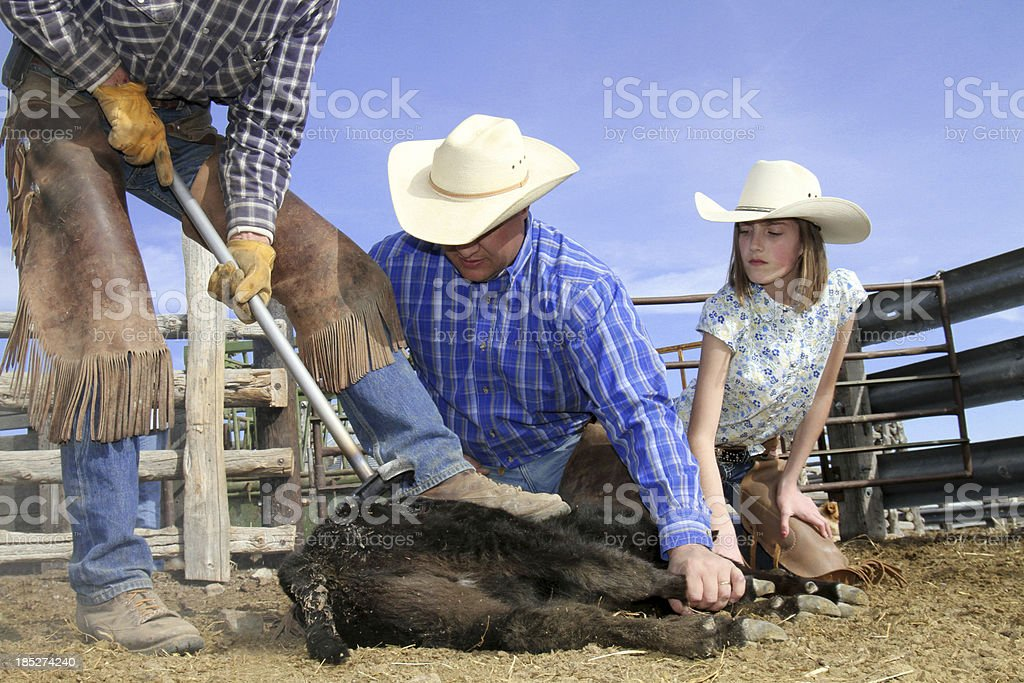 Young Girl watching a calf get branded stock photo