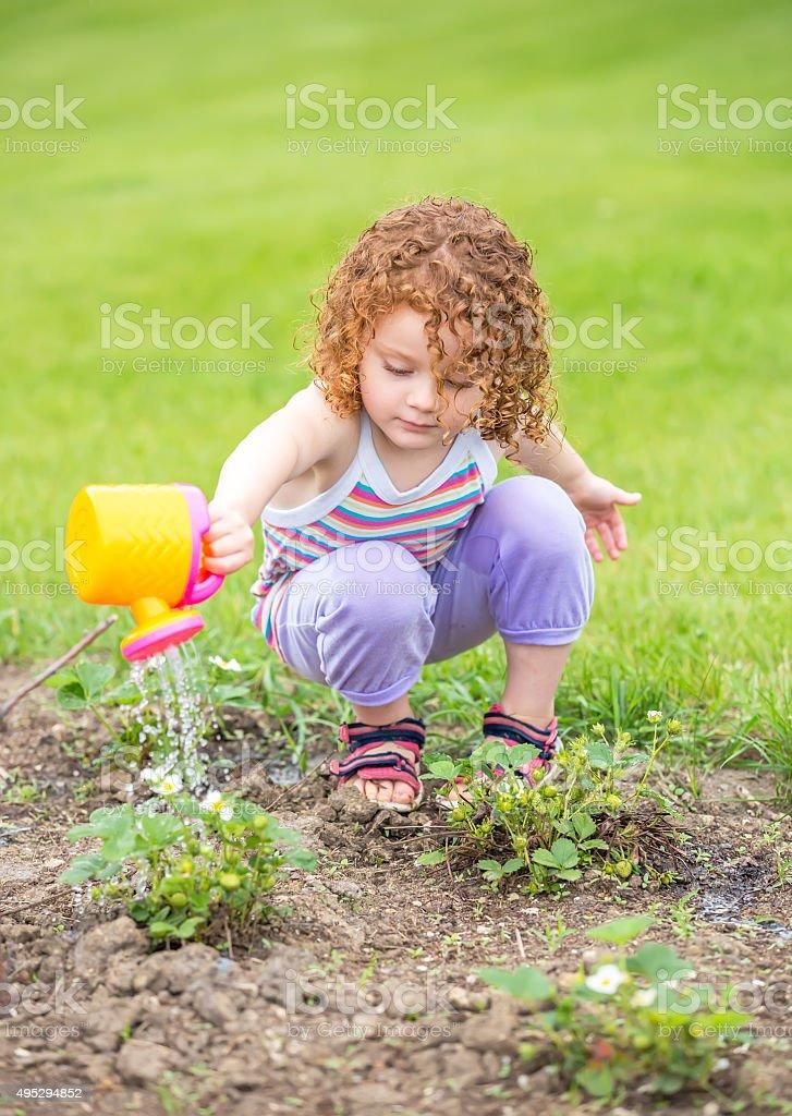 Young Girl Watering Strawberries in Garden stock photo