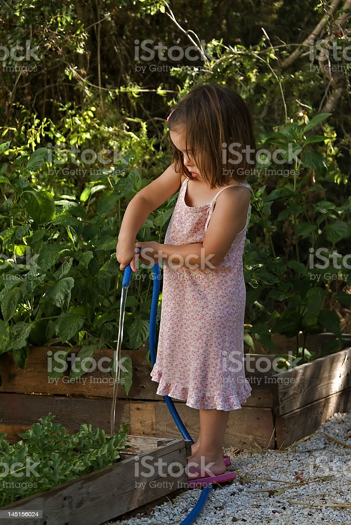 Young girl watering the vegtable garden royalty-free stock photo