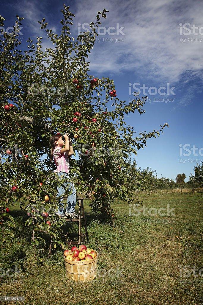 Young girl with binoculars royalty-free stock photo