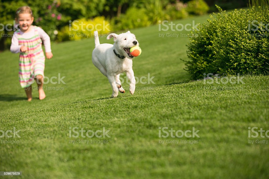 Young girl with dog playing in garden stock photo
