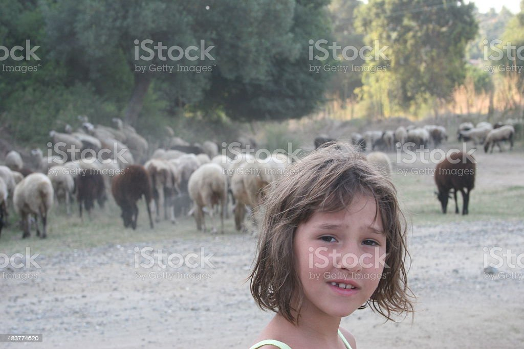 Young girl with sheep stock photo