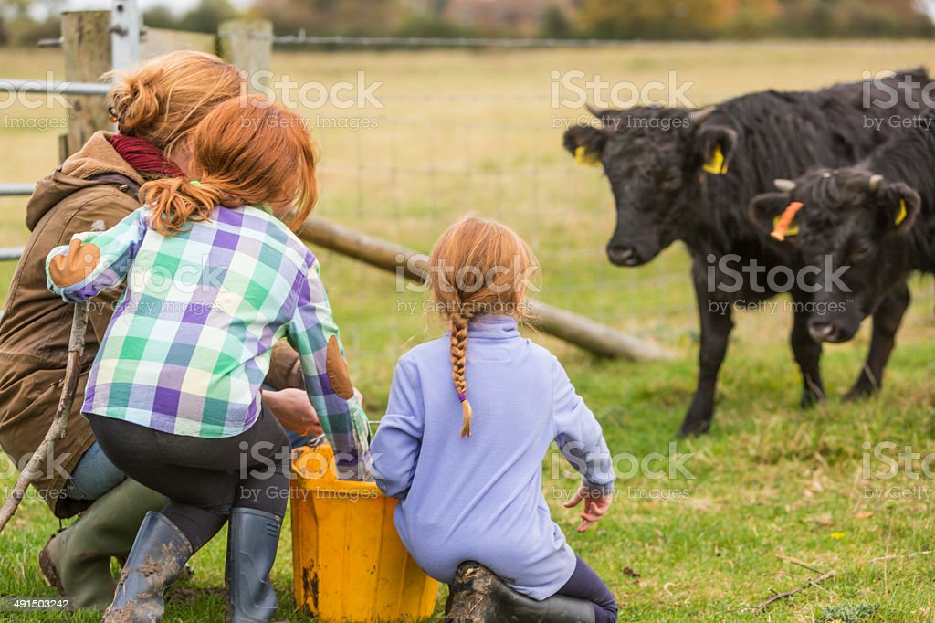 Young Girls and Mother Feeding Cows on an Organic Farm stock photo
