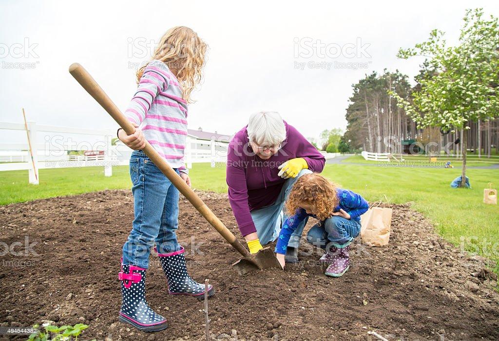 Young Girls Helping Grandma Plant Potatoes in Garden stock photo