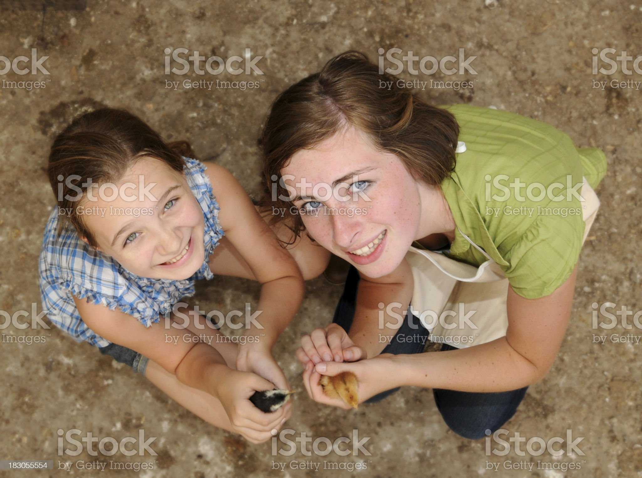 Young Girls with Baby Chicks royalty-free stock photo