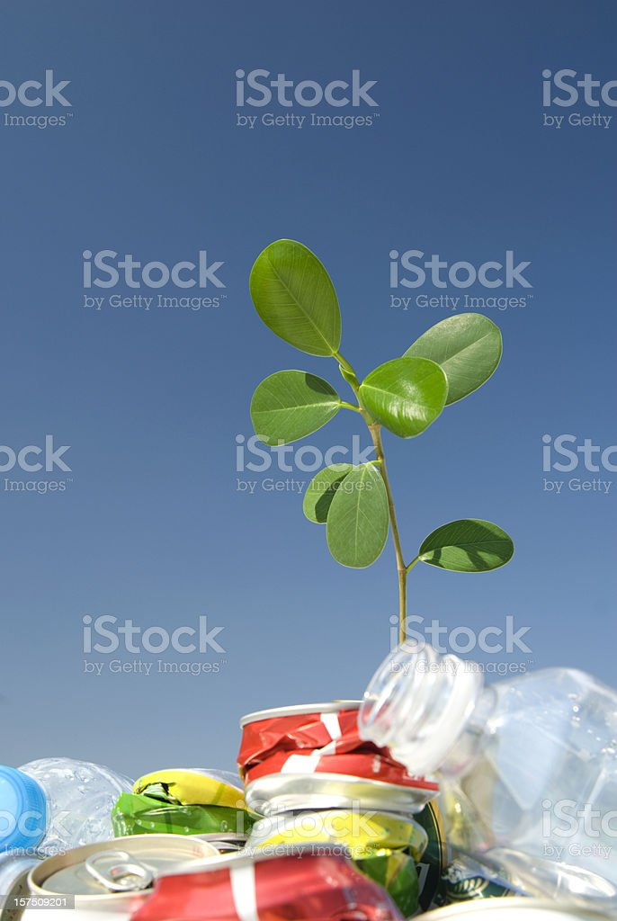 Young green leaf growing from dirty garbage against blue sky royalty-free stock photo