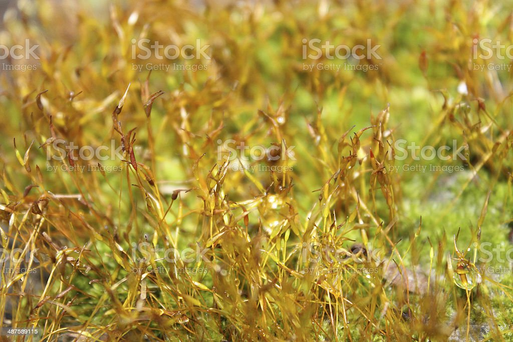 young green moss royalty-free stock photo