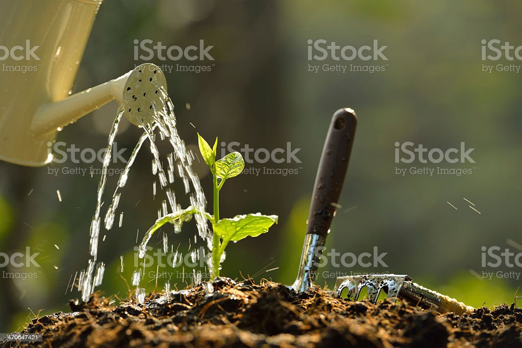 A young green plant being watered on a pile of soil stock photo