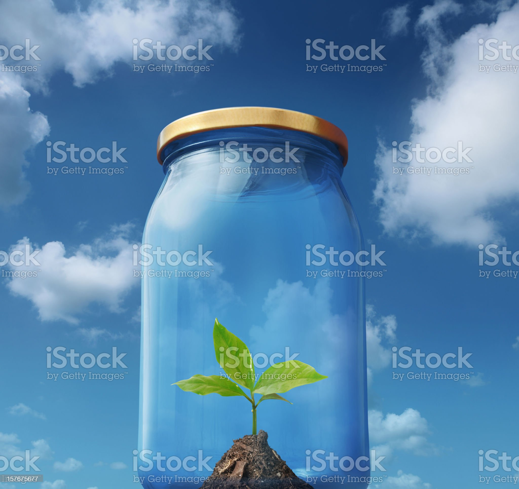 Young Green Plant Captured in the Glass Bottle royalty-free stock photo
